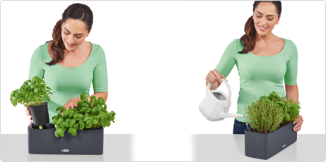 Meta la maceta de hierbas aromáticas en CUBE Color