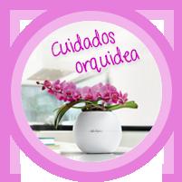 Cuidados orquidea