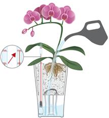 Orchideen in LECHUZA gießen