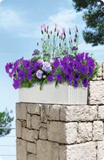 Pflanztipps für Balkonblumen in BALCONERA Cottage