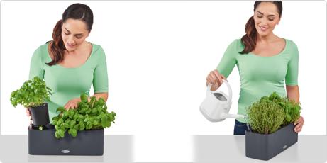 Meta la maceta de hierbas aromáticas en BALCONISSIMA Color