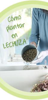 Cómo plantar en LECHUZ